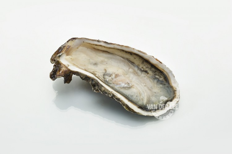 Demi-coquille d'huîtres creuses